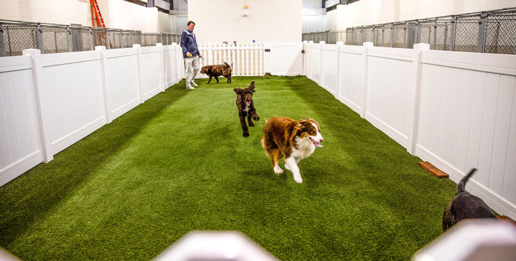 indoor pet park at Carolina Pet Place
