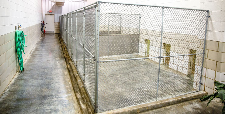 standard pet boarding cages